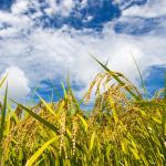農業の工業化への加上